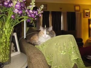 Tulip Psychic Kitty